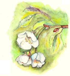 Fleurs de pommier, techniques  mixtes