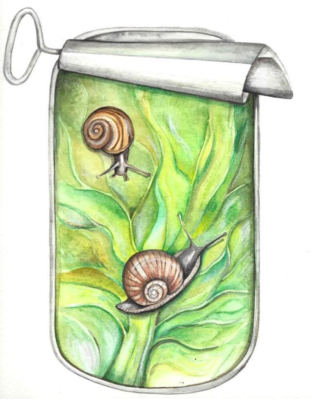 boîte d'escargots, Nathalie pellissier, 2014