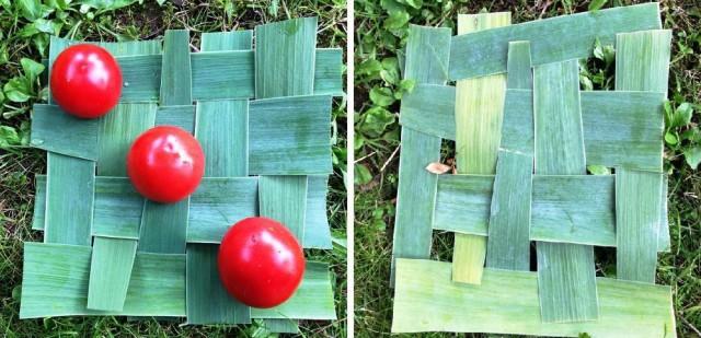 Avant-après, feuilles d'iris et tomates